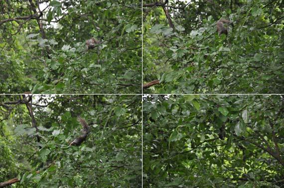 Squirrel gyrations copy