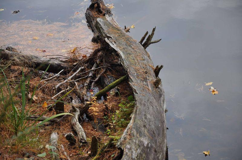 Log or canoe