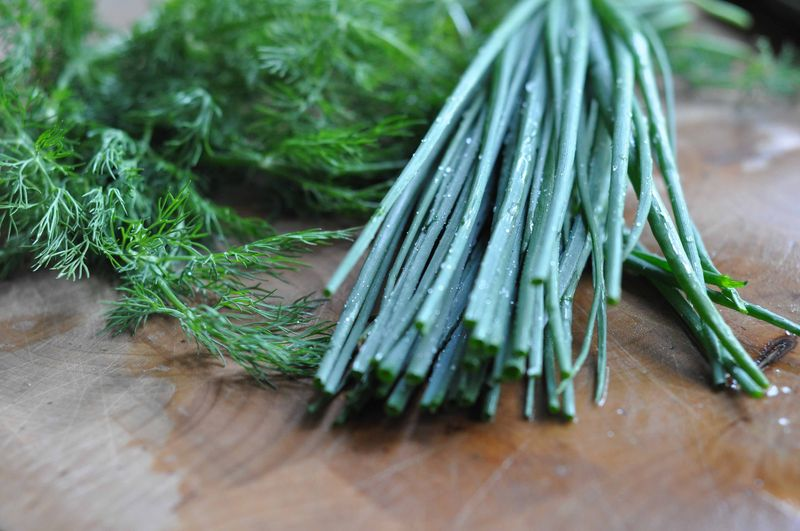 Dill and chives